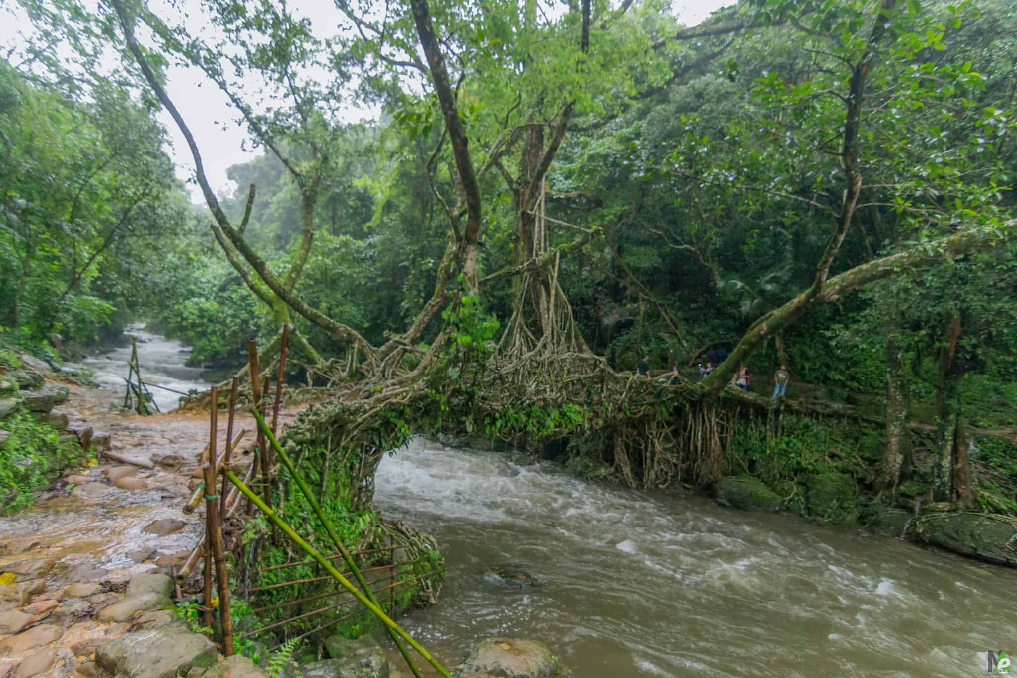 Living Root Bridge Of Nohwet, Riwai Mawlynnong