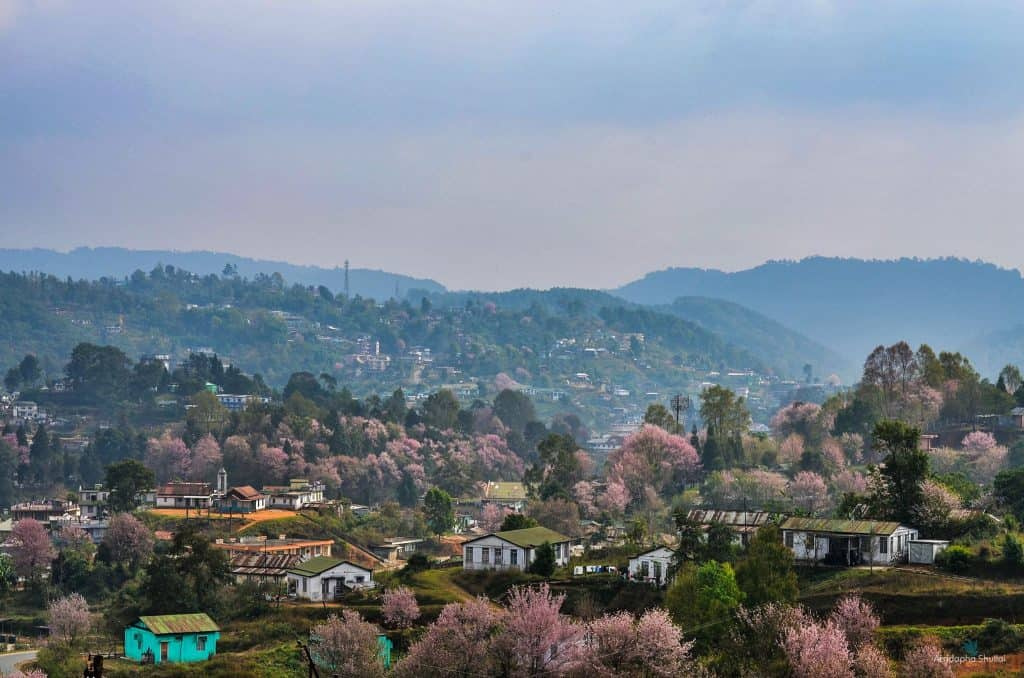 cherry blossom festival 2019 sillong
