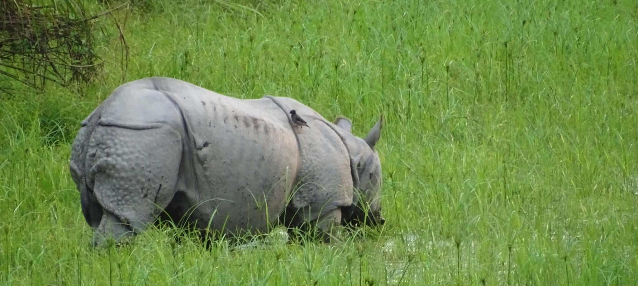 Tour To Kaziranga National Park Jungle Safari