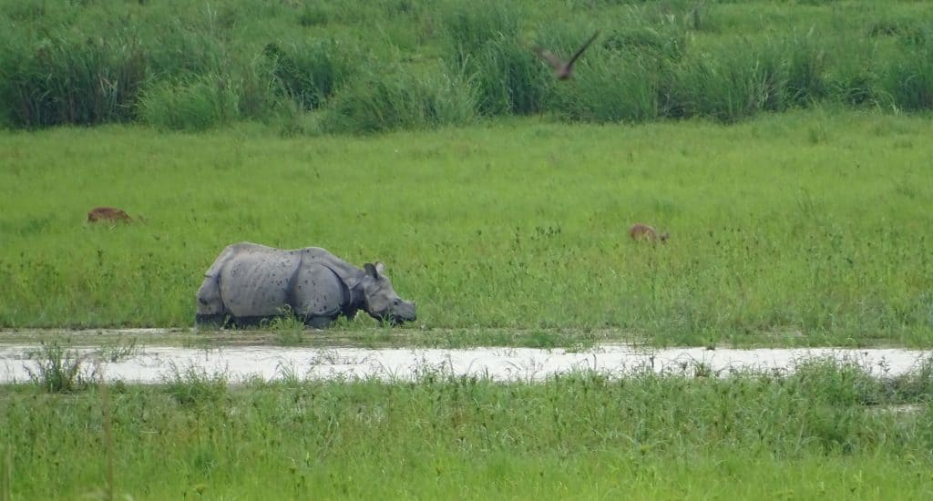 what is the best time to visit Kaziranga National park