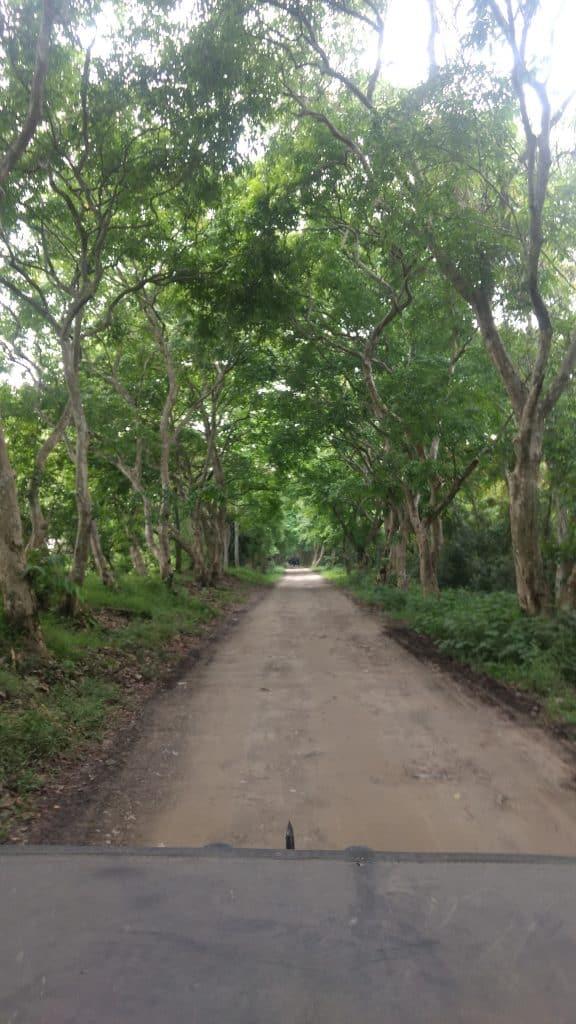 Kaziranga forest deep trails