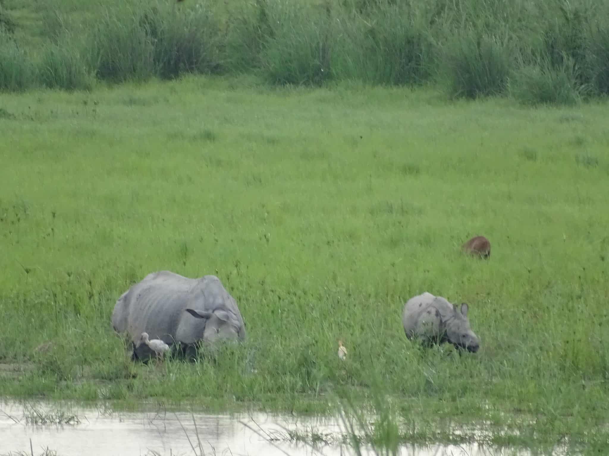 Rhino Spotting in Kaziranga