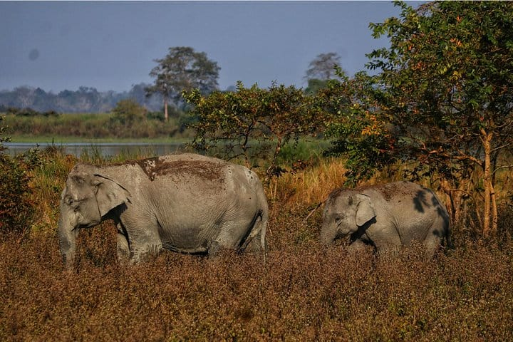 kaziranga and tawang 8 days